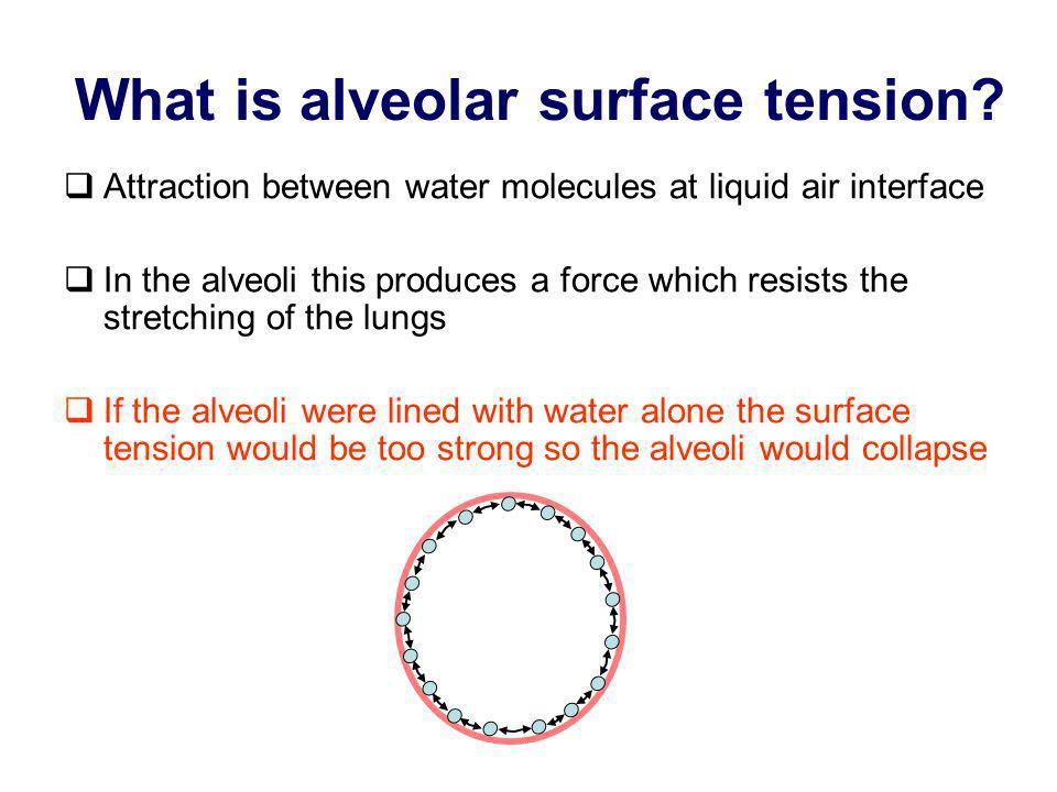 What is alveolar surface tension