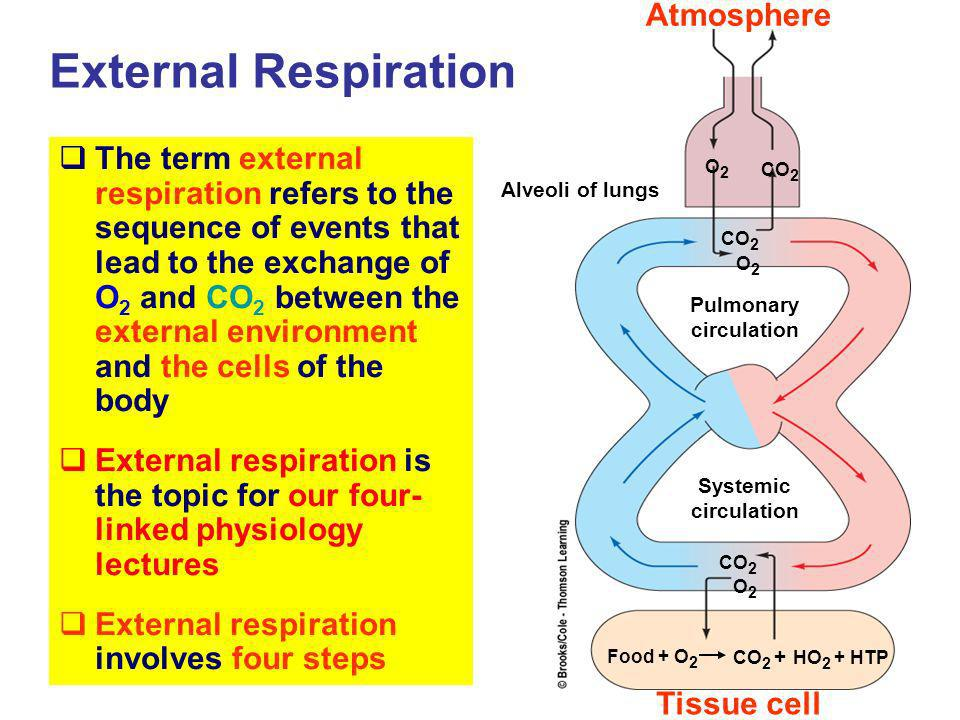 External Respiration Atmosphere