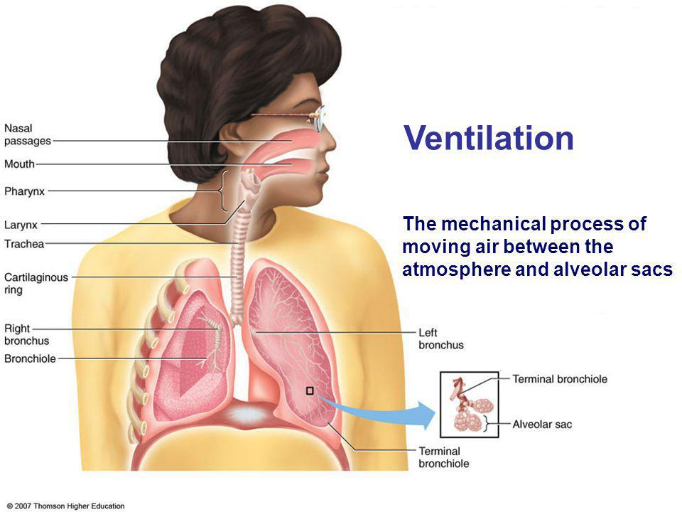 Ventilation The mechanical process of moving air between the