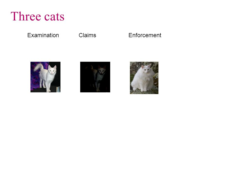 Three cats Examination Claims Enforcement