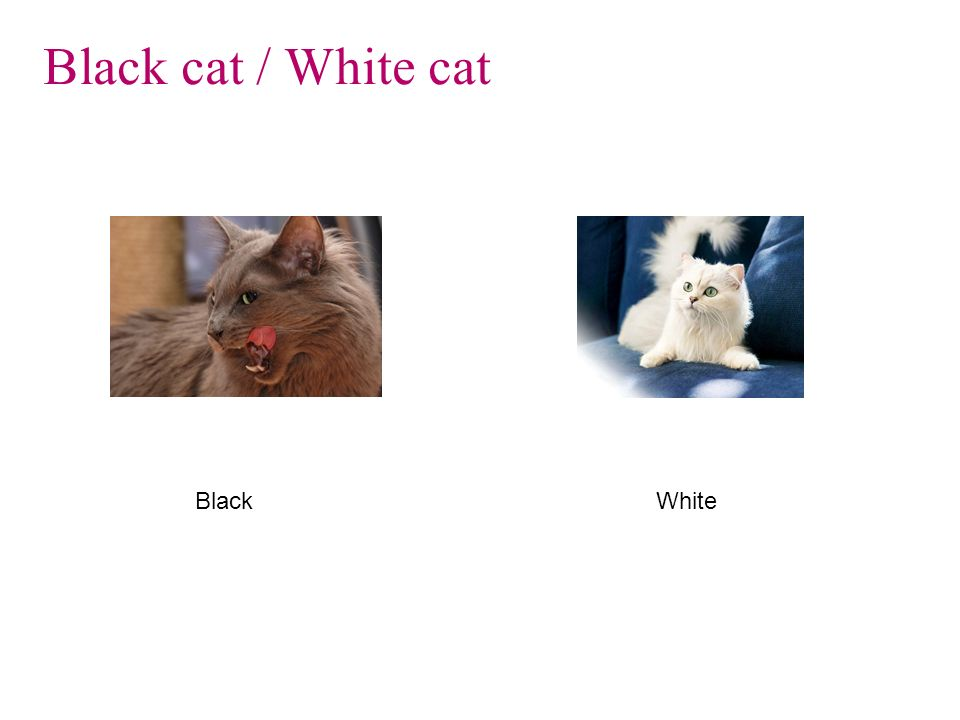 Black cat / White cat Black White