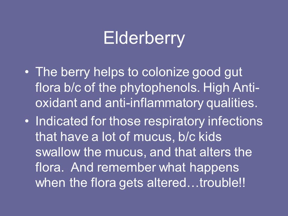 Elderberry The berry helps to colonize good gut flora b/c of the phytophenols. High Anti-oxidant and anti-inflammatory qualities.
