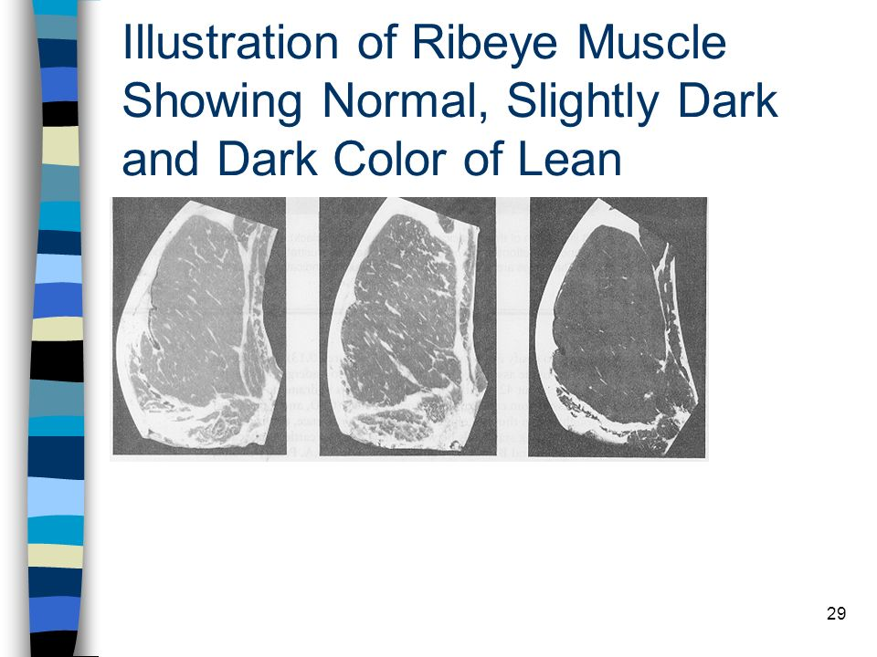 Illustration of Ribeye Muscle Showing Normal, Slightly Dark and Dark Color of Lean