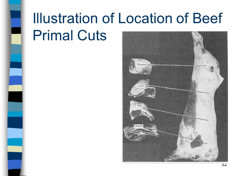 Illustration of Location of Beef Primal Cuts