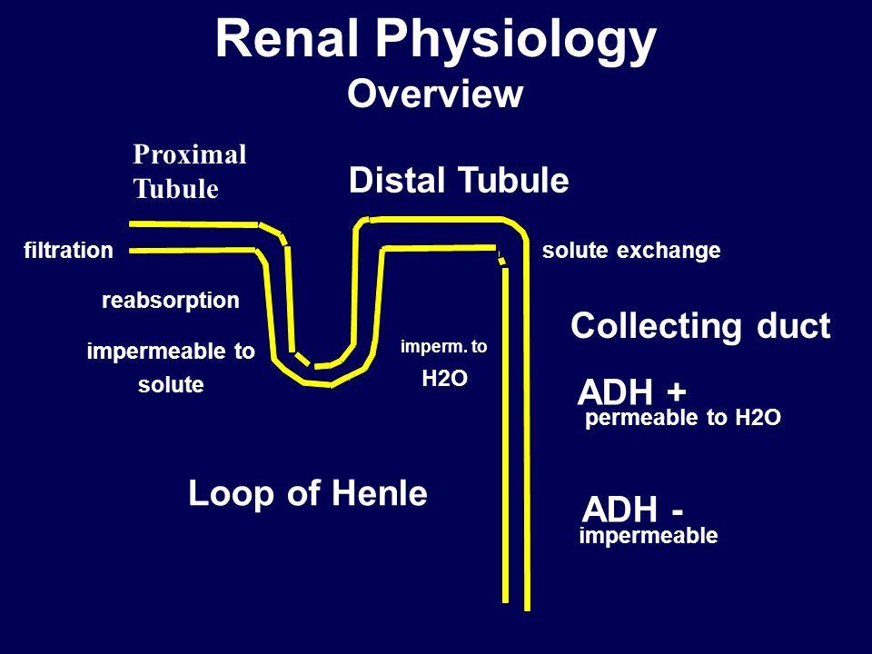 Renal Physiology Overview