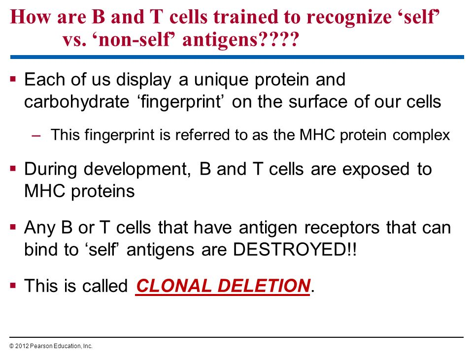 How are B and T cells trained to recognize 'self' vs