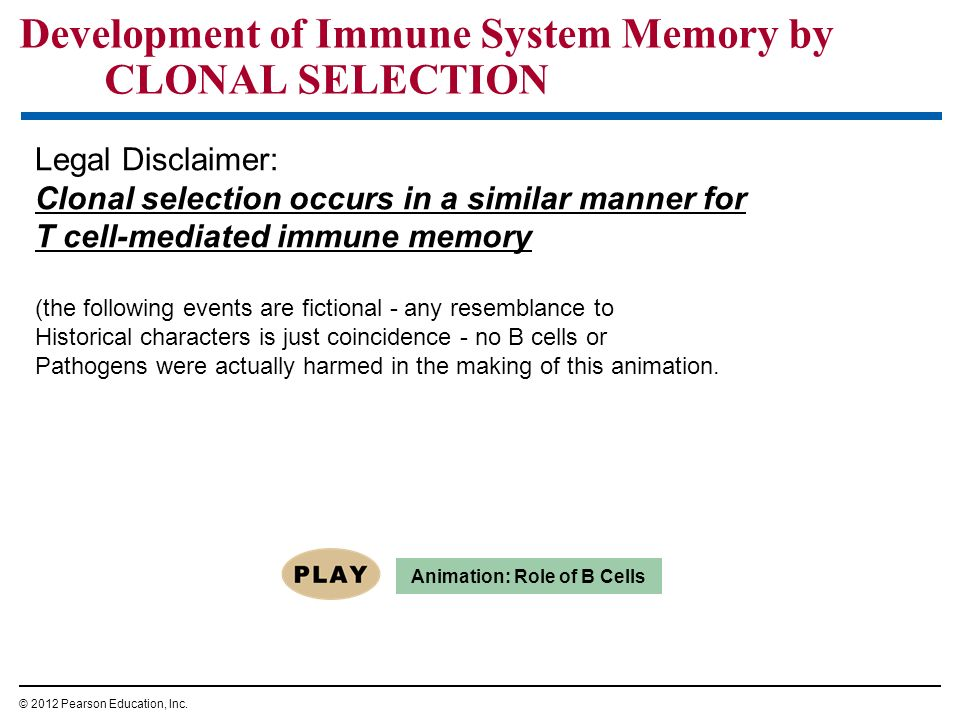 Development of Immune System Memory by CLONAL SELECTION