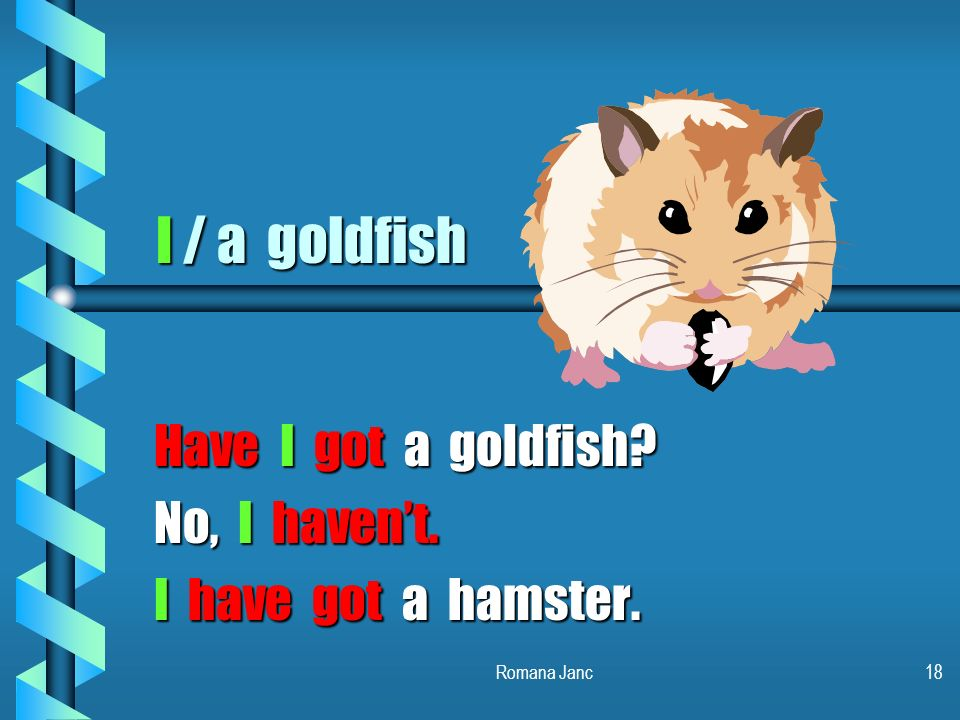 Have I got a goldfish No, I haven't. I have got a hamster.