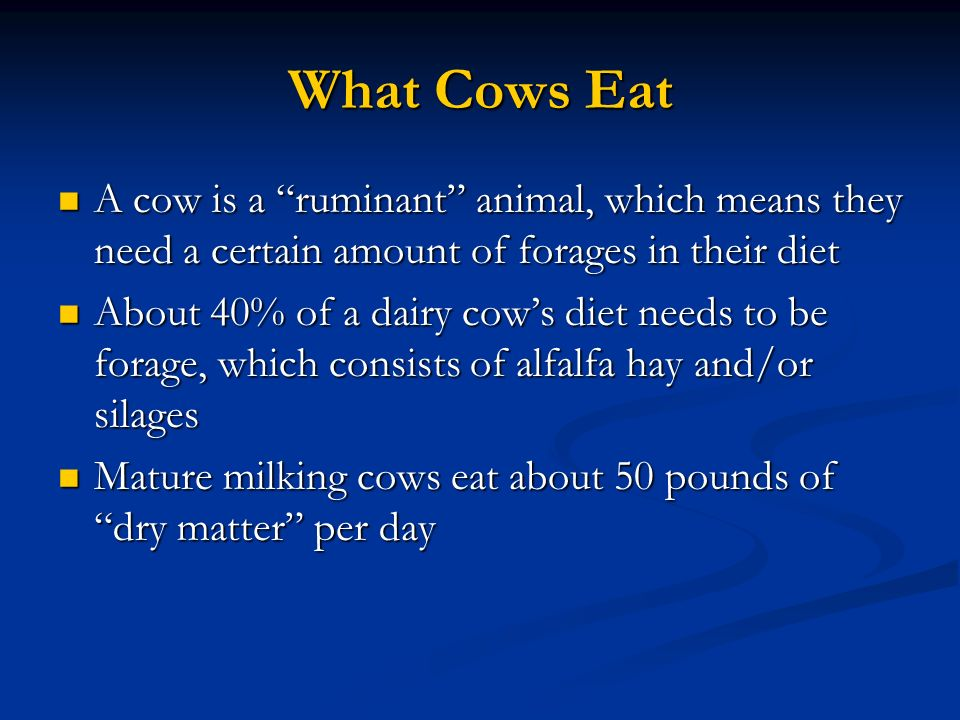 What Cows Eat A cow is a ruminant animal, which means they need a certain amount of forages in their diet.