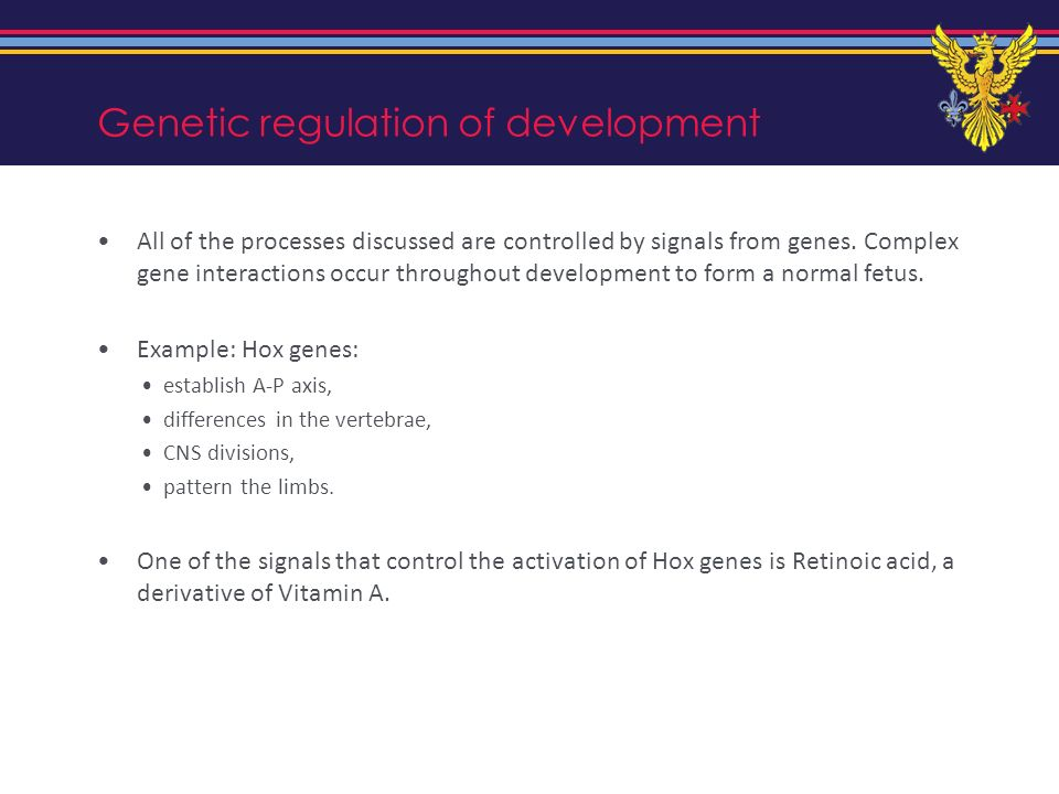 Genetic regulation of development