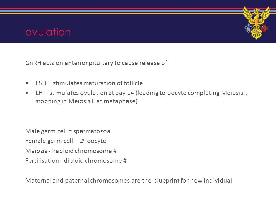 ovulation GnRH acts on anterior pituitary to cause release of: