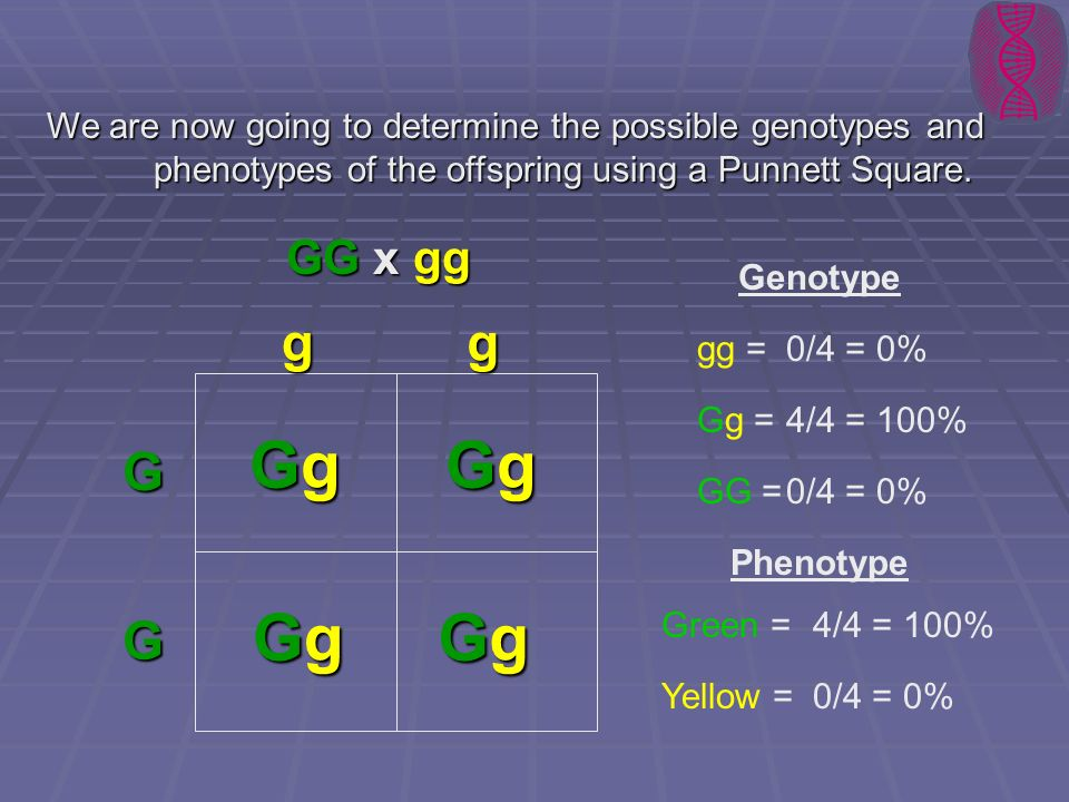 We are now going to determine the possible genotypes and
