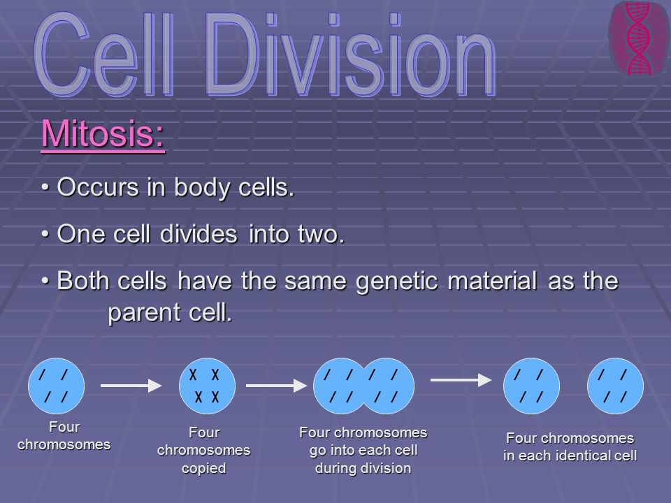Cell Division Mitosis: Occurs in body cells.