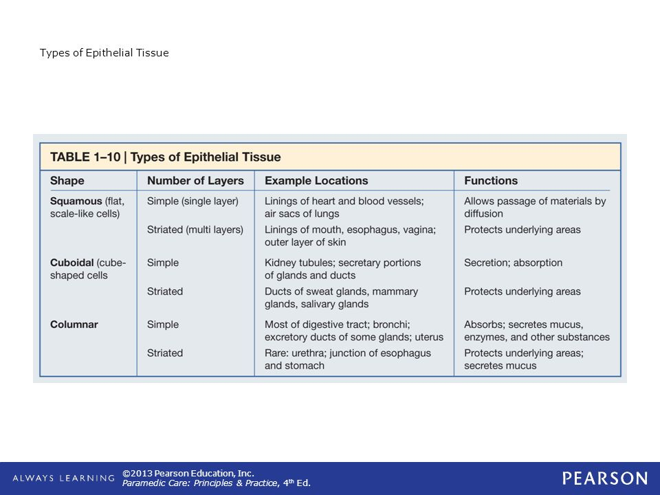 Types of Epithelial Tissue