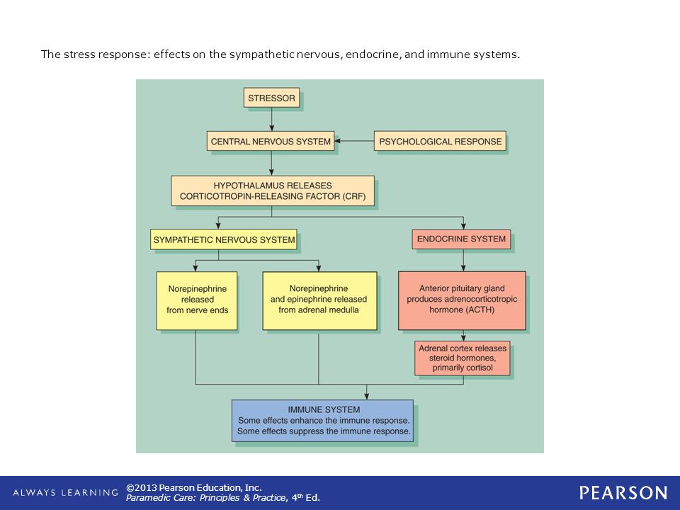 The stress response: effects on the sympathetic nervous, endocrine, and immune systems.