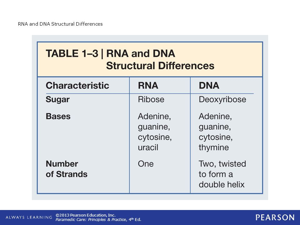 RNA and DNA Structural Differences