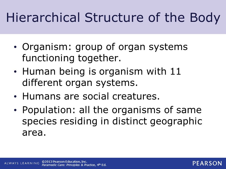 Hierarchical Structure of the Body