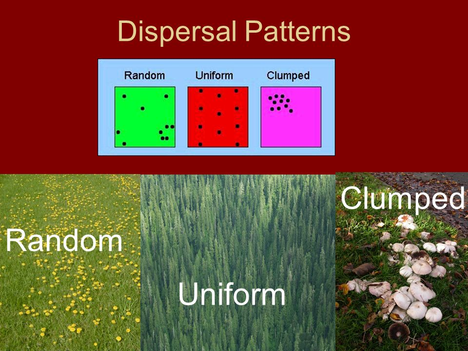 Dispersal Patterns Clumped Random Uniform