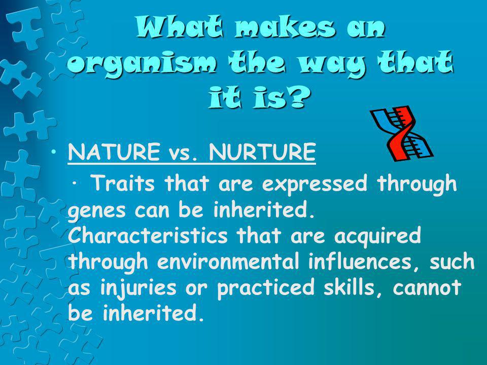 What makes an organism the way that it is
