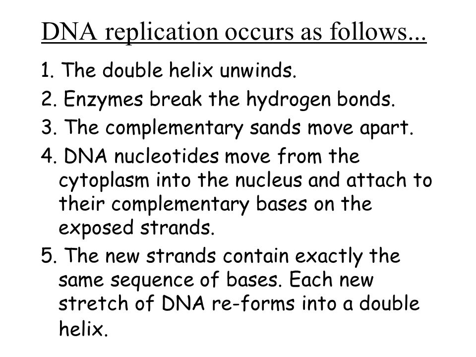 DNA replication occurs as follows...