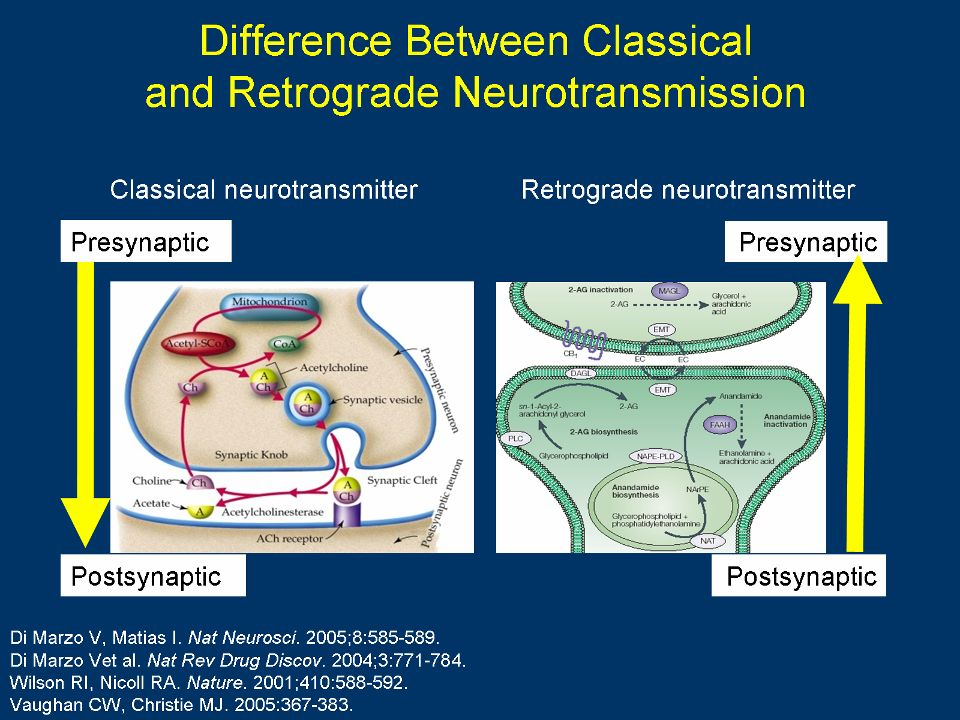Difference Between Classical and Retrograde Neurotransmission