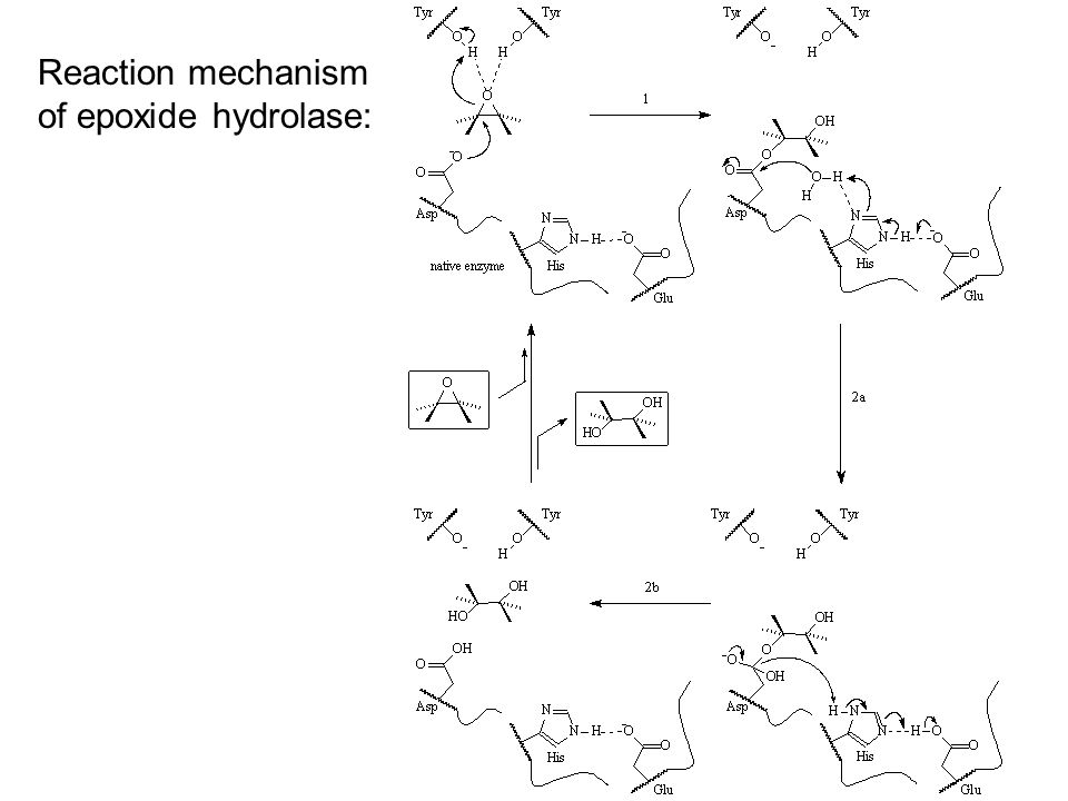Reaction mechanism of epoxide hydrolase: