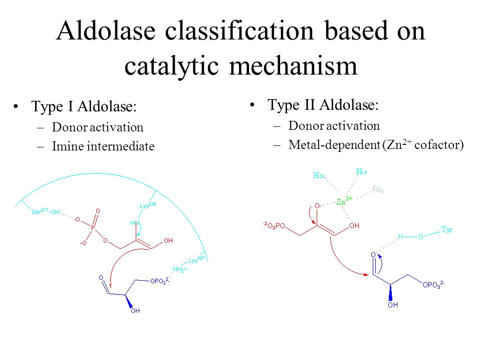 Aldolase classification based on catalytic mechanism