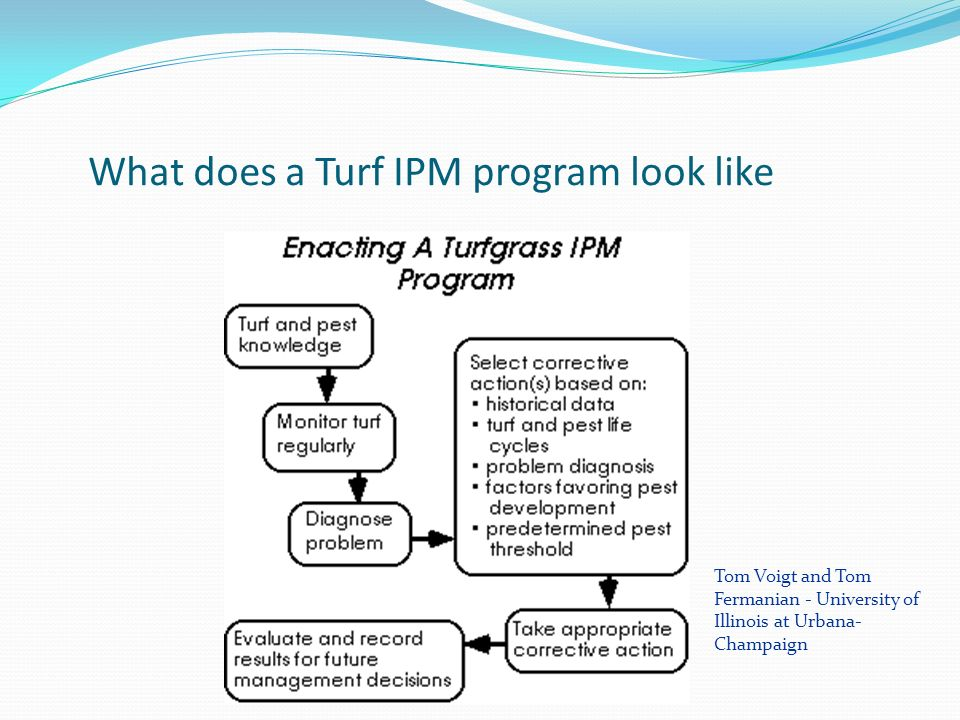 What does a Turf IPM program look like