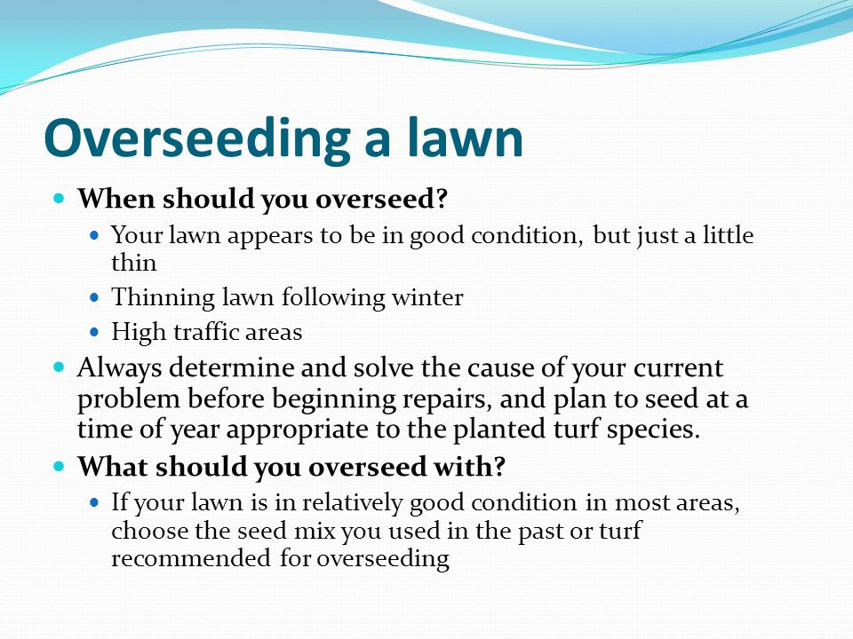 Overseeding a lawn When should you overseed