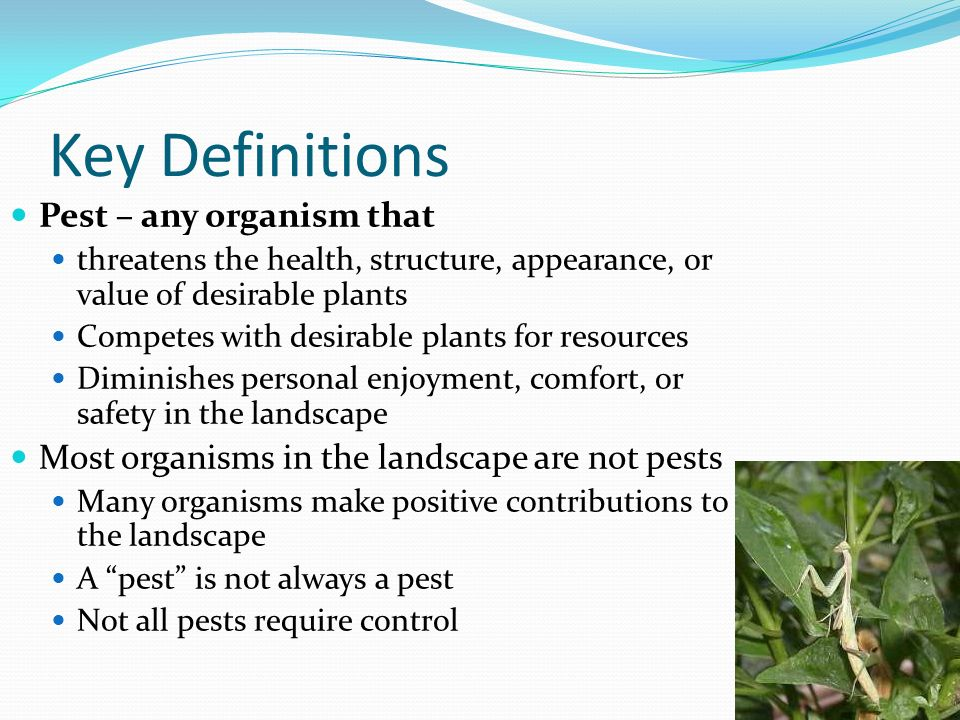 Key Definitions Pest – any organism that