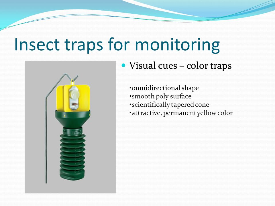 Insect traps for monitoring