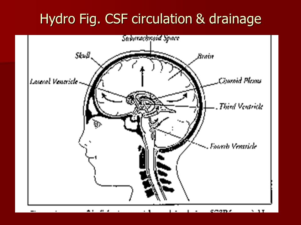 Hydro Fig. CSF circulation & drainage