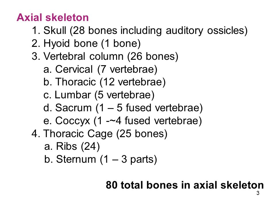 Axial skeleton 1. Skull (28 bones including auditory ossicles) 2. Hyoid bone (1 bone) 3. Vertebral column (26 bones)