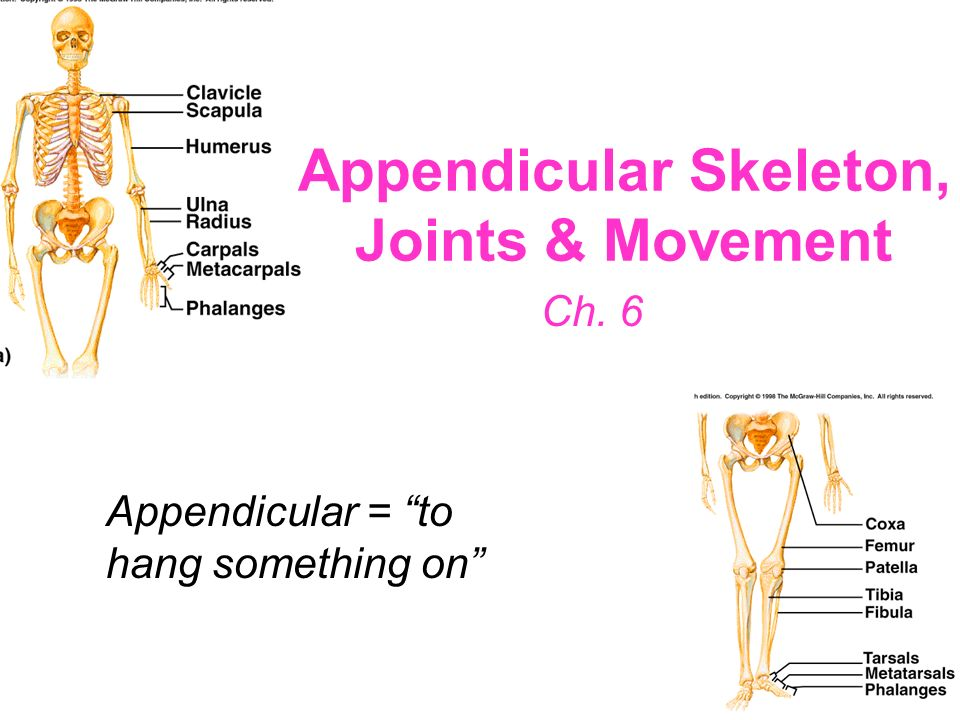 Appendicular Skeleton, Joints & Movement