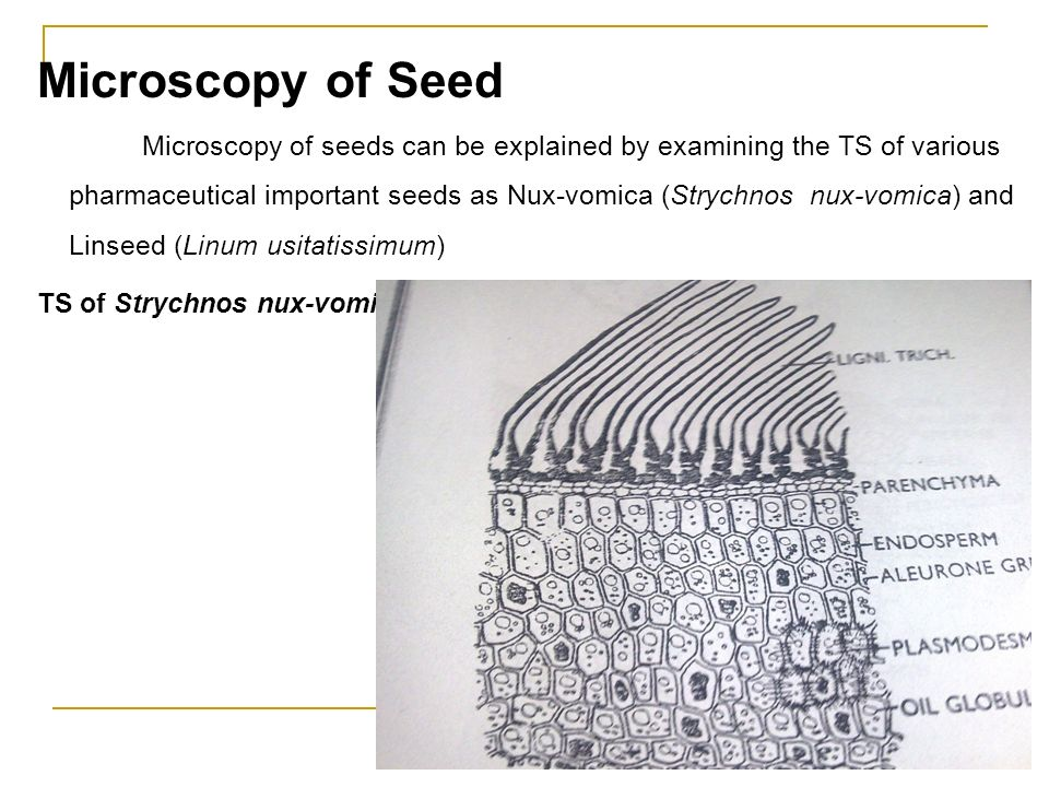 Microscopy of Seed