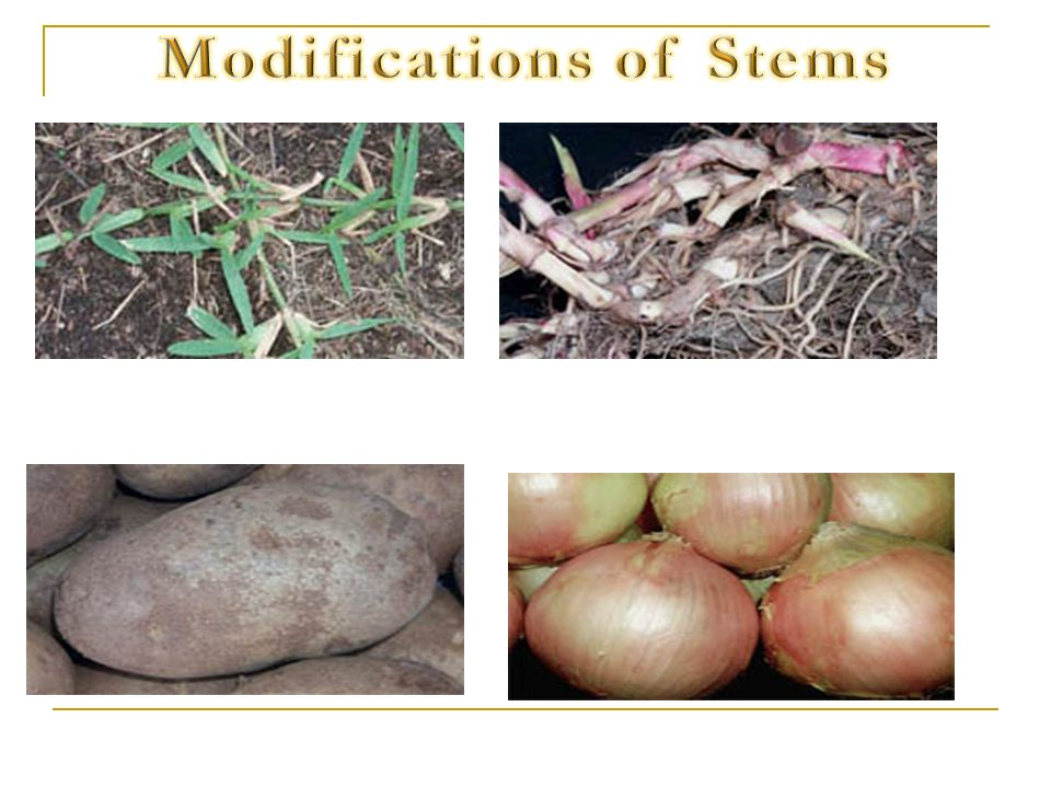 Modifications of Stems