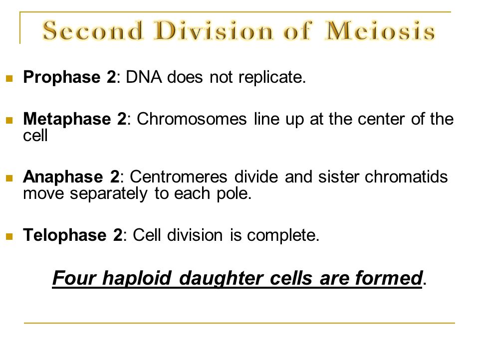 Second Division of Meiosis