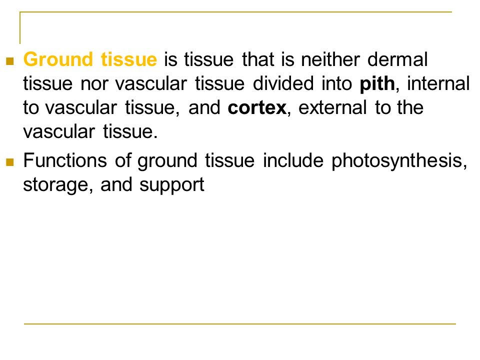 Ground tissue is tissue that is neither dermal tissue nor vascular tissue divided into pith, internal to vascular tissue, and cortex, external to the vascular tissue.