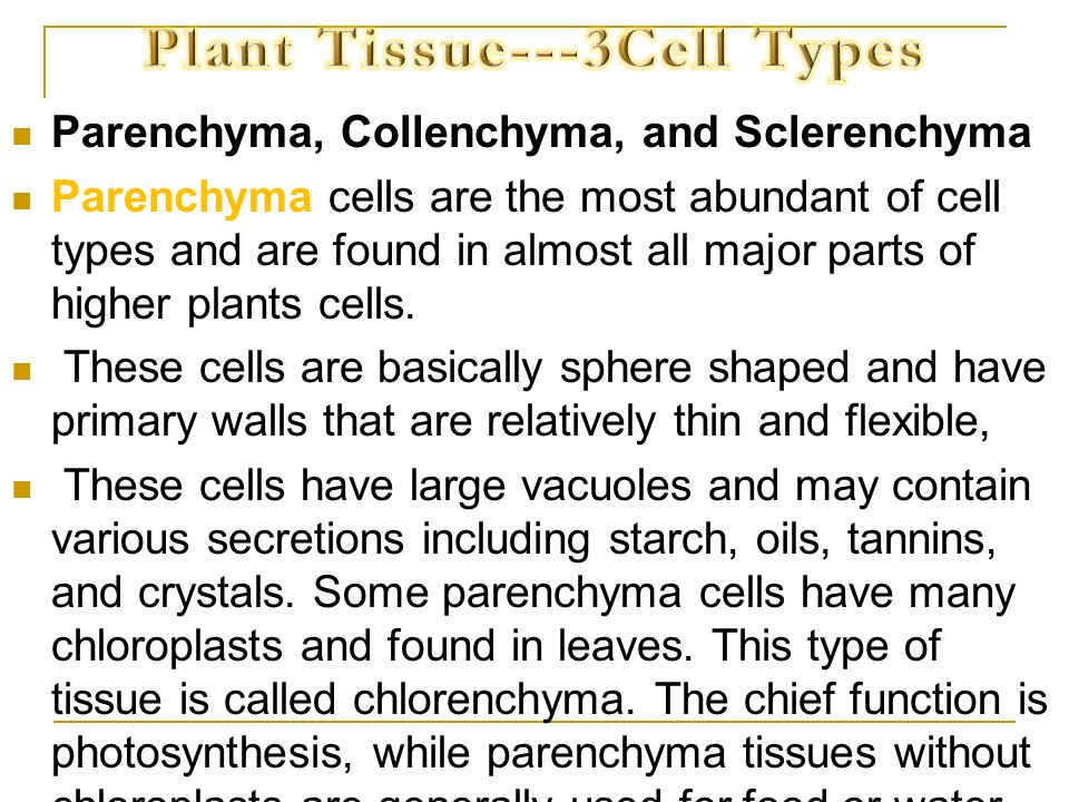 Plant Tissue---3Cell Types
