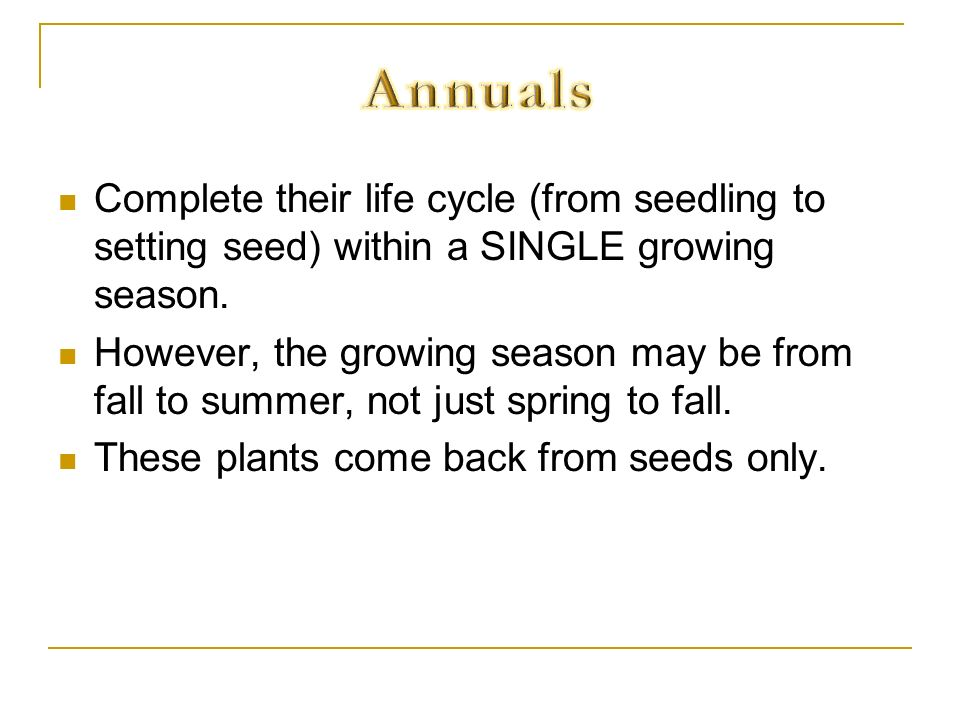 Annuals Complete their life cycle (from seedling to setting seed) within a SINGLE growing season.