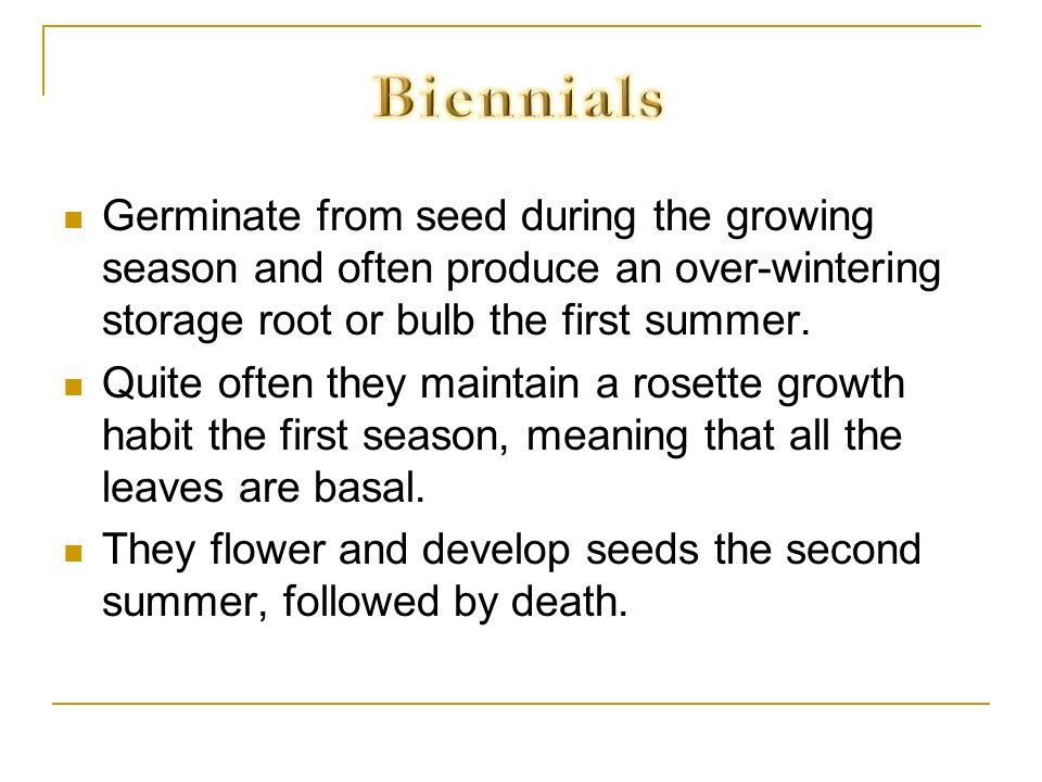Biennials Germinate from seed during the growing season and often produce an over-wintering storage root or bulb the first summer.