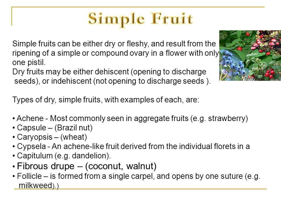 Simple Fruit Simple fruits can be either dry or fleshy, and result from the. ripening of a simple or compound ovary in a flower with only.