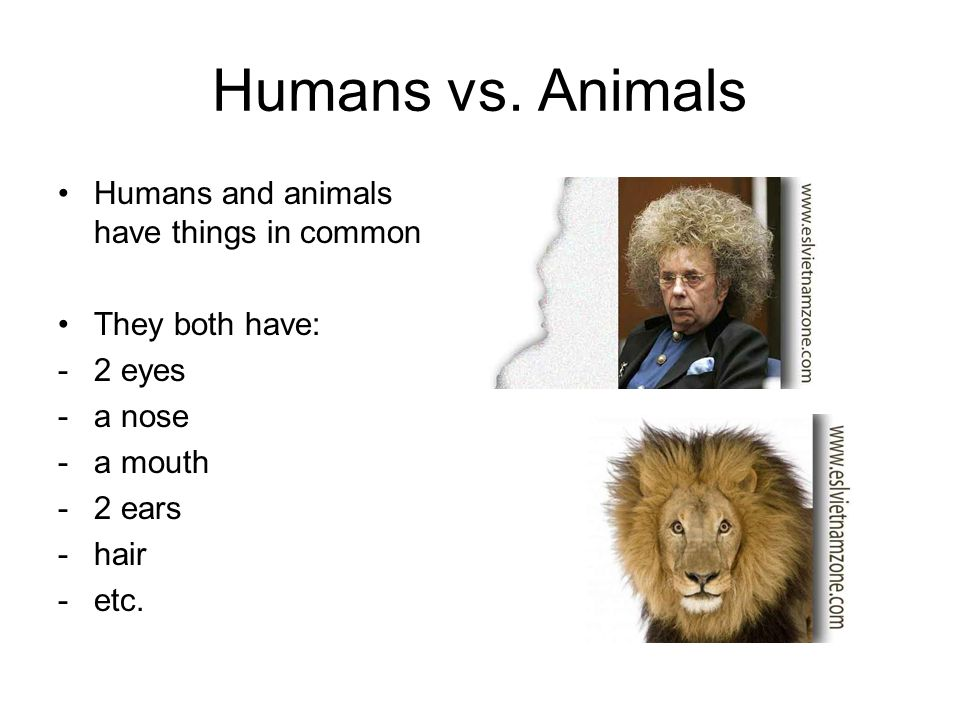 Humans vs. Animals Humans and animals have things in common