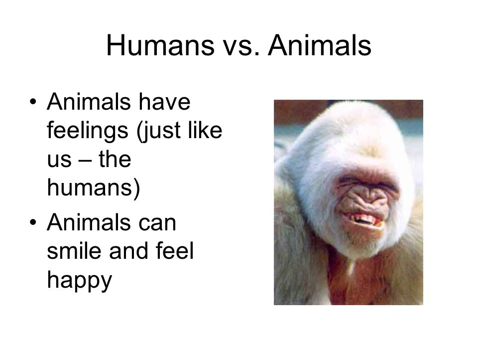 Humans vs. Animals Animals have feelings (just like us – the humans)