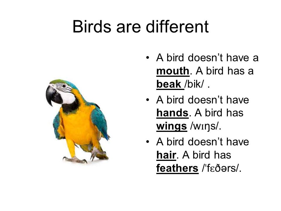 Birds are different A bird doesn't have a mouth. A bird has a beak /bik/ . A bird doesn't have hands. A bird has wings /wɪŋs/.