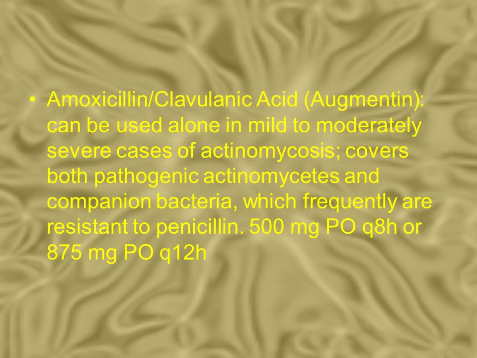 Amoxicillin/Clavulanic Acid (Augmentin): can be used alone in mild to moderately severe cases of actinomycosis; covers both pathogenic actinomycetes and companion bacteria, which frequently are resistant to penicillin.