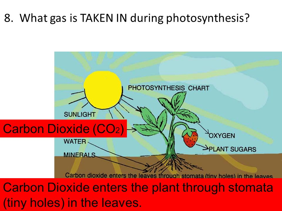 8. What gas is TAKEN IN during photosynthesis