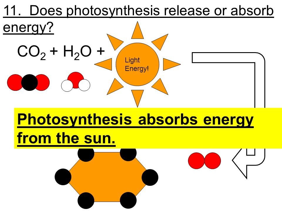 Photosynthesis absorbs energy from the sun. + O2