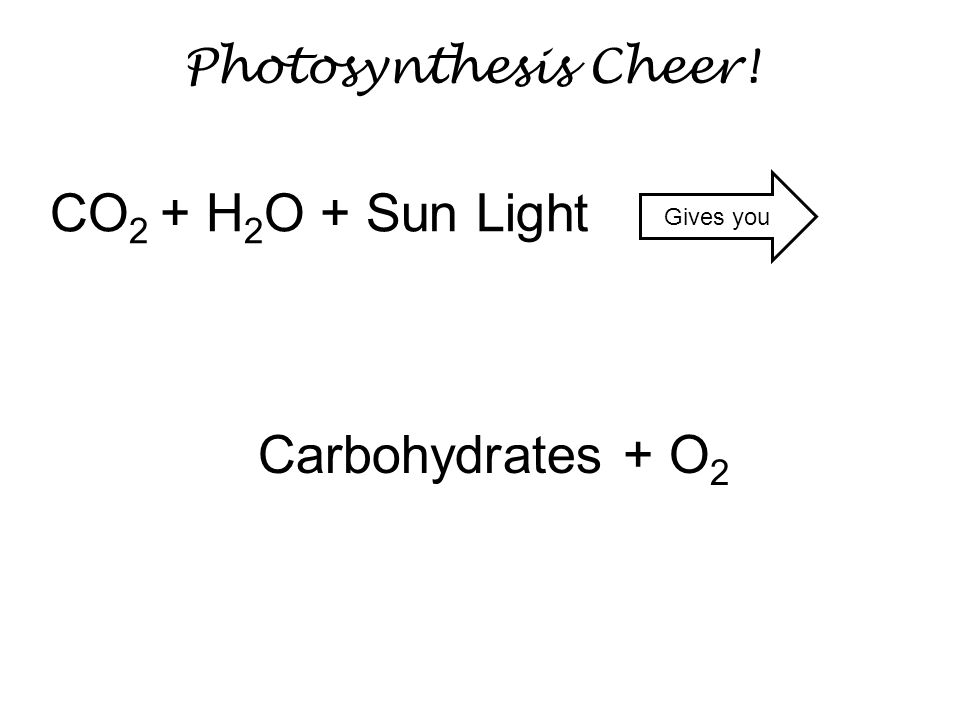 CO2 + H2O + Sun Light Carbohydrates + O2 Photosynthesis Cheer!