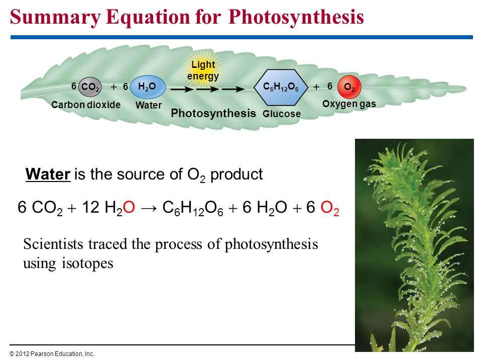 Summary Equation for Photosynthesis